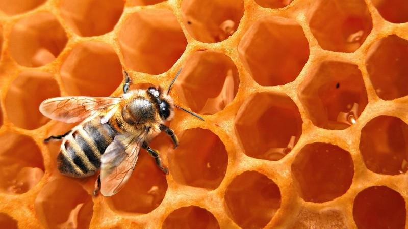 Mesilaste ravi liigeste Knondroksiidi salvi liigestele