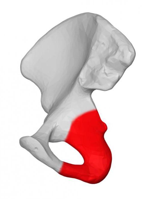 Rahvahooldus osteokondroosi jaoks 3 kraadi Imetamine liigeste haiguste imetamine