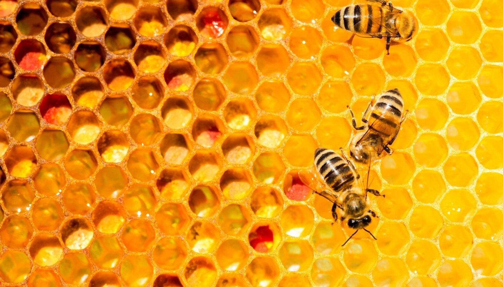 Mesilaste ravi liigeste Henna valu liigestes