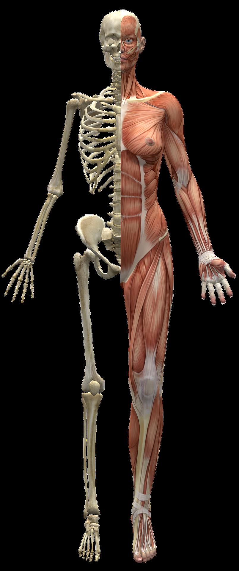 Luude ja liigeste haiguste klassifikatsioon Tahendab valu liigeste ja sidemete valu