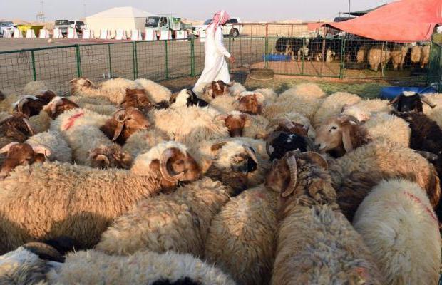 Lammaste liigeste haigused