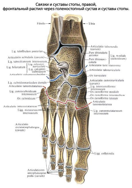 Kate liigeste artroosi ravi