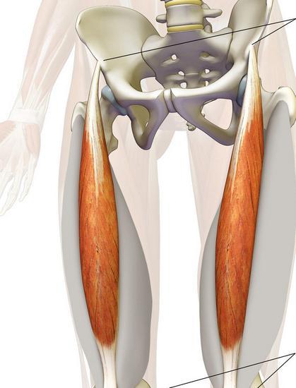 Muscle ola liigesed haiget Vala ohtul