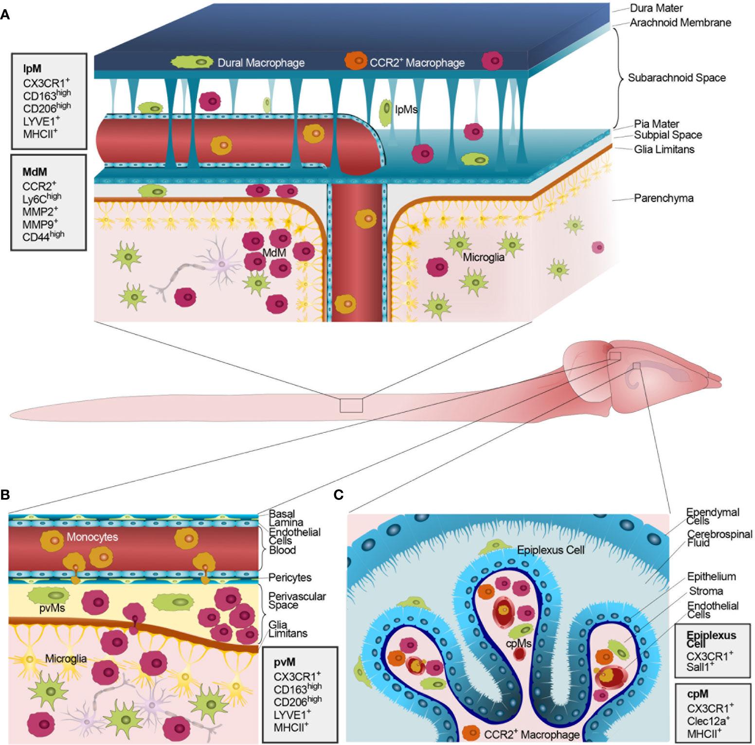Doppel Herz Chondroitiin ja glukoosamiin Osta