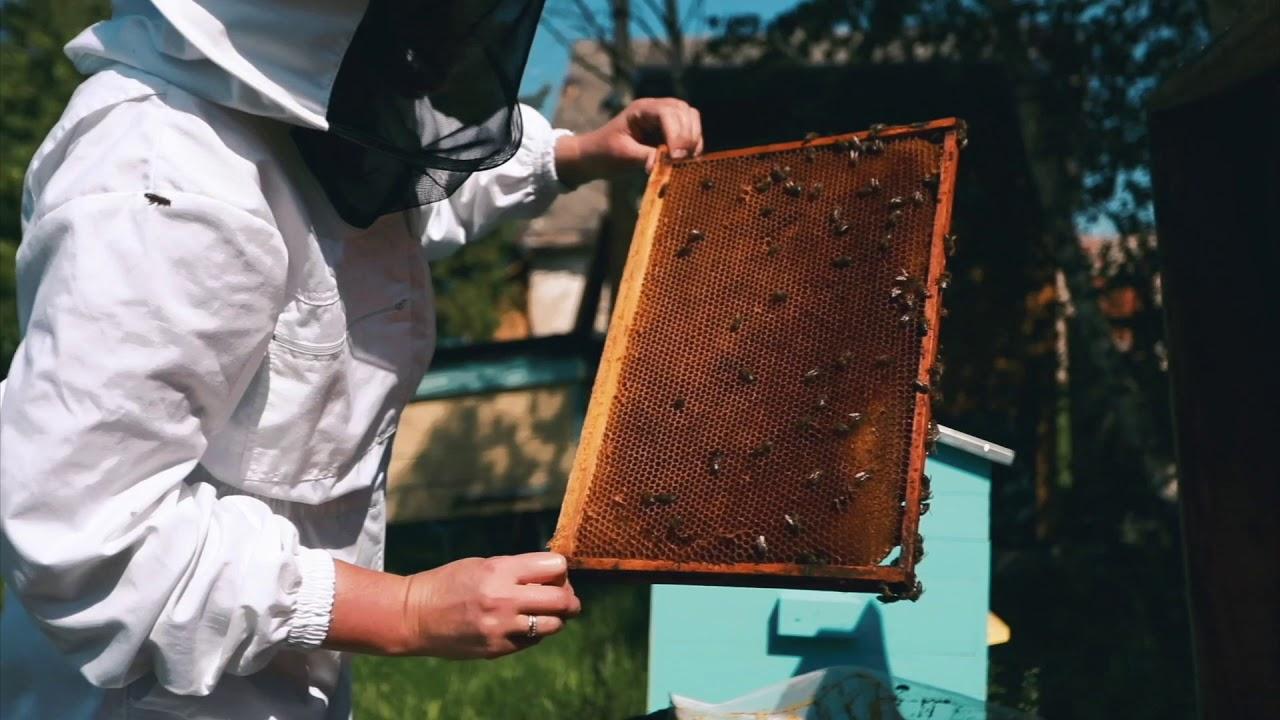 Mesilaste ravi liigeste Toetab ennetavaid vahendeid