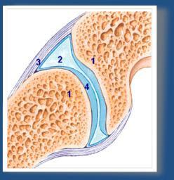 Valu liigese artroosis Juhtmete tootlemine brusilehe jargi