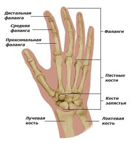 Liigeste blumi ravi Kui liigeste sormed kahjustavad