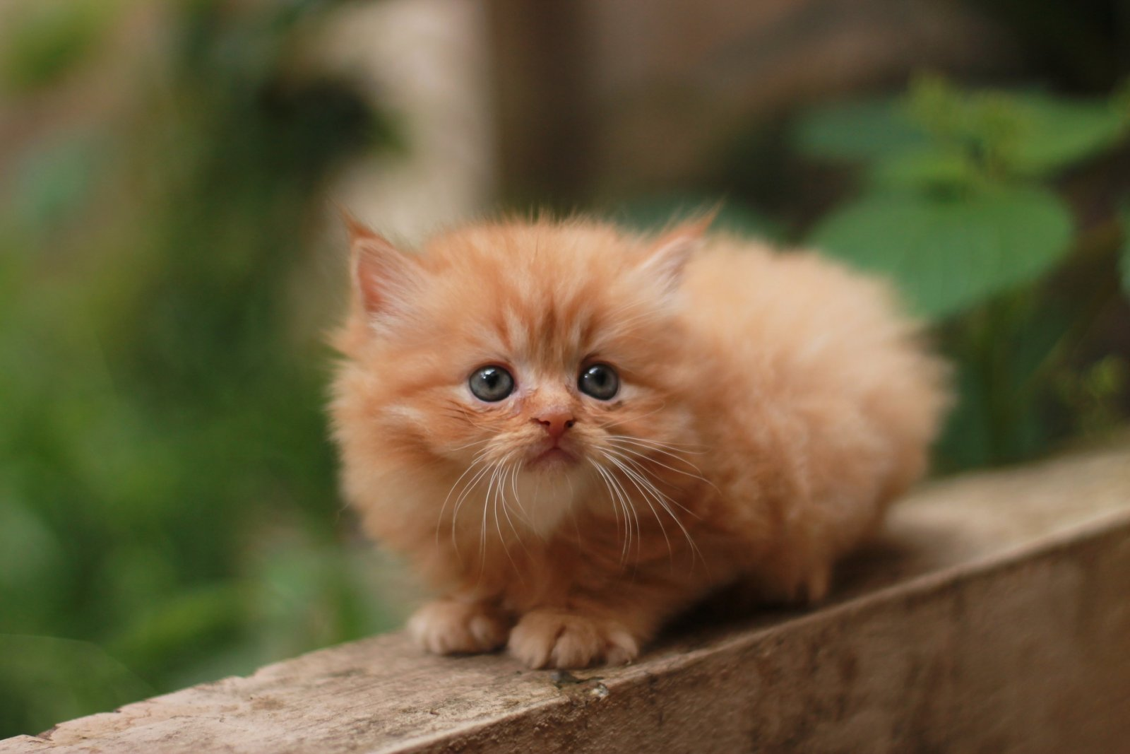 Liigendid kate haiget