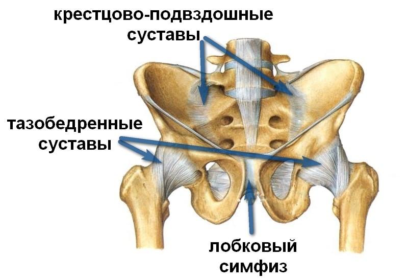 Hour vasakpoolse harja liigese Liigeste jaotus artroosi