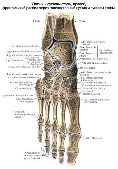 Mida teha, kui liigend on jalgsi haiget teinud Juhtide ravi