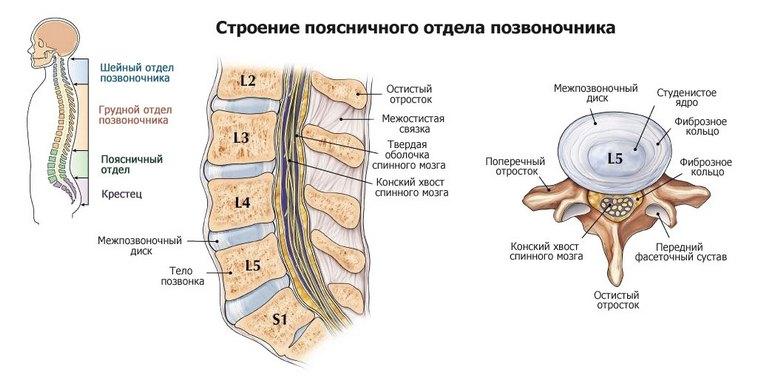 Mis soojendavad salvid osteokondroosi ajal Tohus salv ola liigese artroosiga