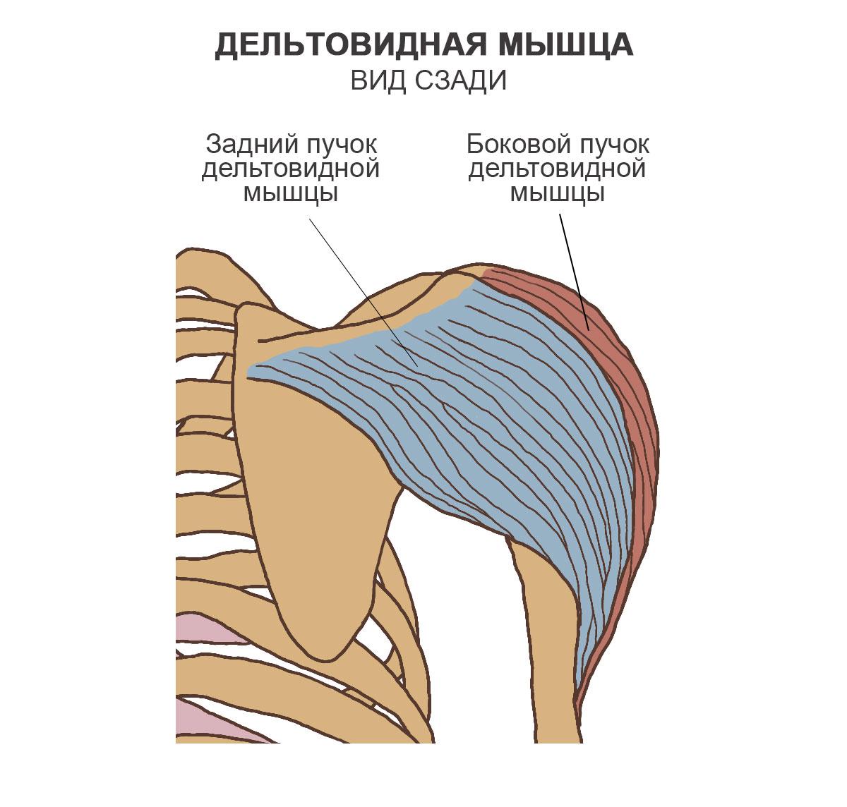 MRI INY liigesed
