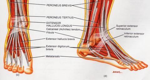 pahkluu jala liigeste turse